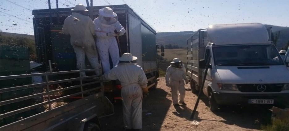 los apicultores
