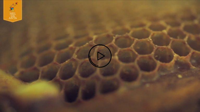 video proceso de la miel